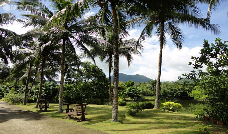 兴隆热带花园椰林景观