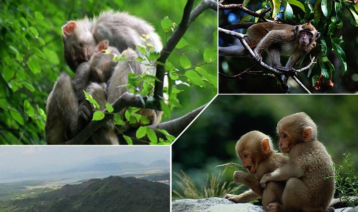 猕猴岭森林风景区