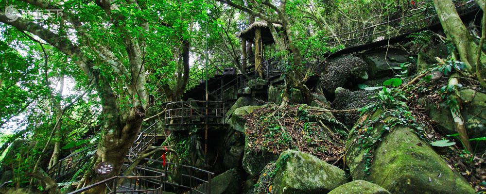 呀诺达-雨林景观